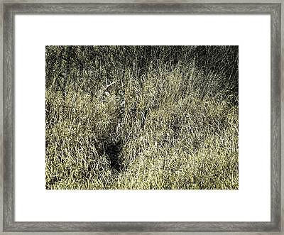 I Got My Buck 2 Framed Print by Thomas Young