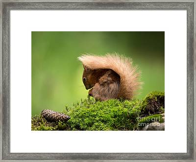 I Hide Under My Tail Framed Print by Louise Heusinkveld