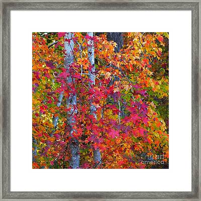 I Love Fall Framed Print by Scott Cameron