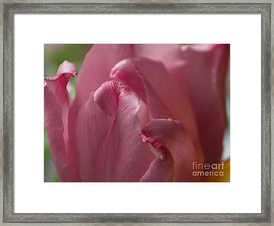 I Love Flowers Framed Print by Adela Kitty