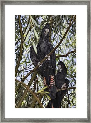 I Say Old Chap Framed Print by Douglas Barnard