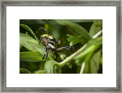 I See You Framed Print by Richard ONeil