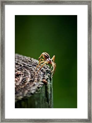 I See You Framed Print by Swift Family