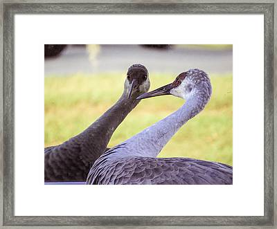 I See You Framed Print by Zina Stromberg