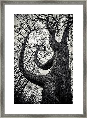 I Will Bend But I Wont Break Framed Print by Off The Beaten Path Photography - Andrew Alexander