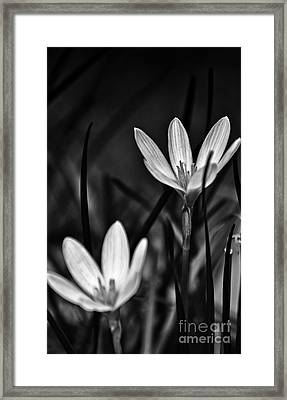 I Will Stand By You For Ever Framed Print by Vineesh Edakkara