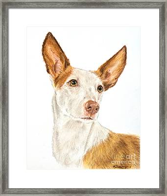 Ibizan Hound In Pastel Framed Print by Kate Sumners