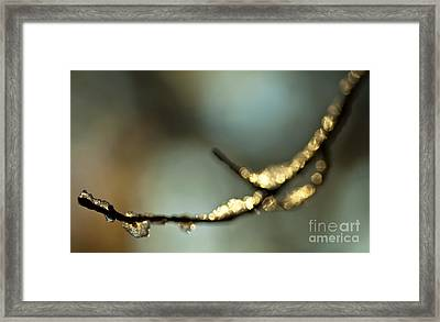 Ice Cold Framed Print by Sue OConnor