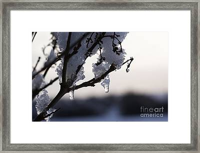 Ice Drop Framed Print by Carol Lynch