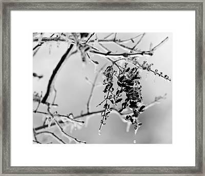 Ice Melting Framed Print by Sandy Keeton