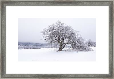 Iced Over Framed Print by Patrick Downey
