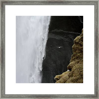 Iceland Seagull Flies Past Skogafoss Framed Print by Jaynes Gallery
