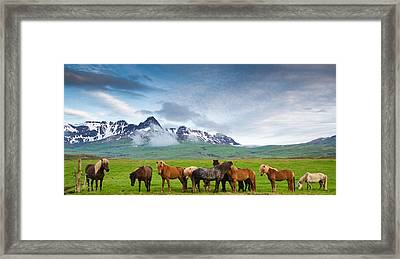 Icelandic Horses In Mountain Landscape In Iceland Framed Print by Matthias Hauser
