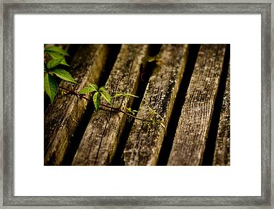 If Framed Print by Shane Holsclaw
