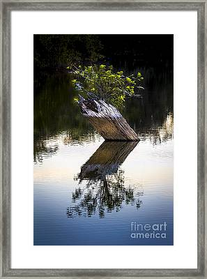 If There Is A Will There Is A Way Framed Print by Marvin Spates