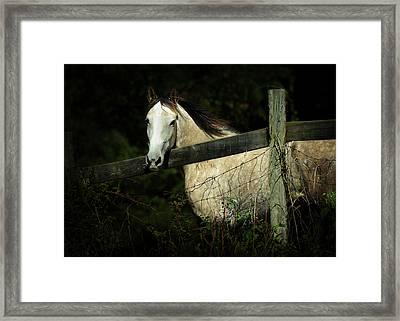 If Wishes Were Horses Framed Print by Rebecca Sherman
