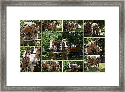 If You Love Belgian Horses Framed Print by Kathy Barney