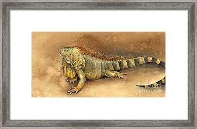 Iguana Framed Print by Nan Wright