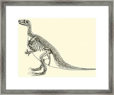 Iguanodon Framed Print by English School