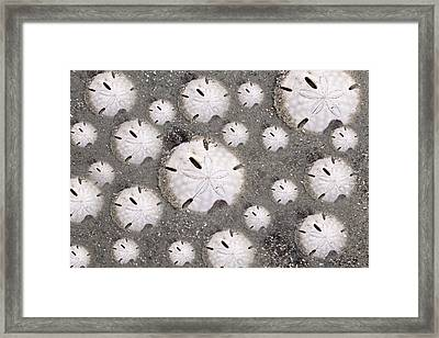 Illusion Of One Framed Print by Betsy Knapp