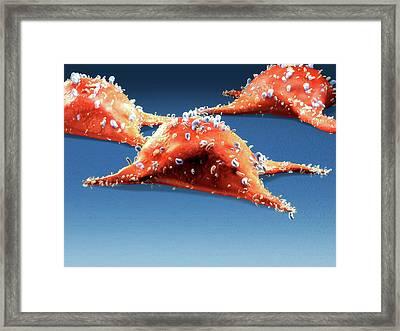 Illustration Of Cancer Cells Framed Print by Harvinder Singh