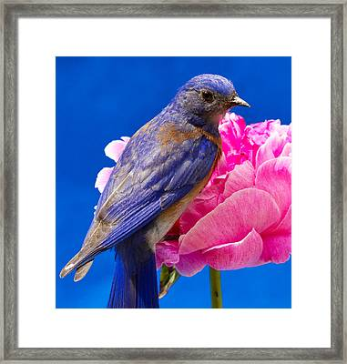 I'm Ready For My Close Up Framed Print by Jean Noren