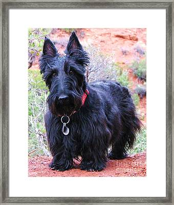 I'm Ready When You Are Framed Print by Michele Penner