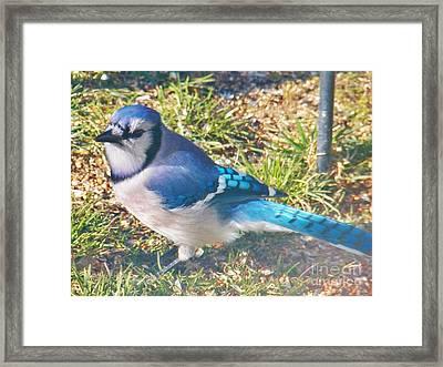 I'm So Blue Framed Print by Judy Via-Wolff