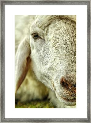 I'm Too Tire Framed Print by Suradej Chuephanich