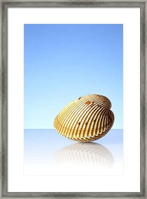 Imaginary Beach Framed Print by Jim Hughes