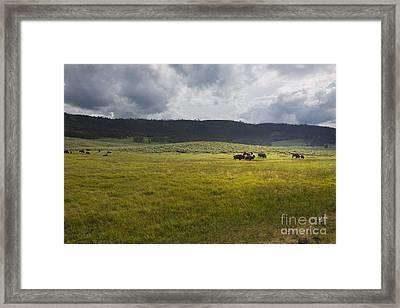 Imagine Framed Print by Belinda Greb