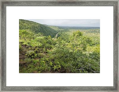 Imfolozi Game Reserve, South Africa Framed Print by Science Photo Library
