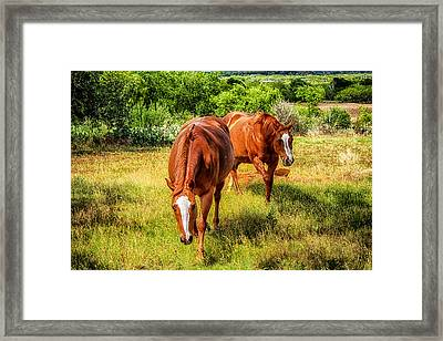 Immie And Princess Framed Print by Toma Caul