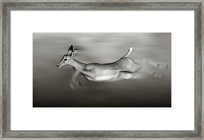 Impala Running  Framed Print by Johan Swanepoel
