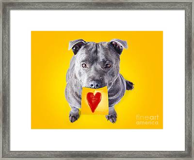 Imploring Staffie With A Sticky Note On His Mouth Framed Print by Jorgo Photography - Wall Art Gallery