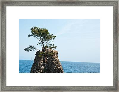 Impossible Nature Framed Print by Mesha Zelkovich
