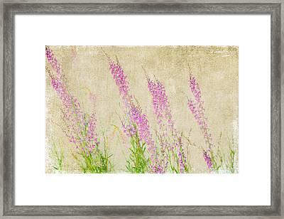 Impressions Of Spring Framed Print by Bonnie Bruno
