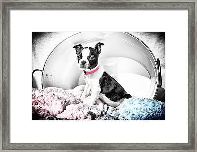 In A Bucket Framed Print by Lori Frostad
