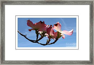 In All Its Glory Framed Print by Sara  Raber