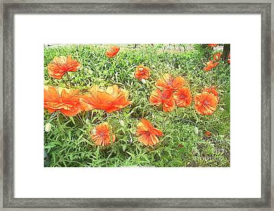In Flanders Fields The Poppies Grow Framed Print by PainterArtist FIN