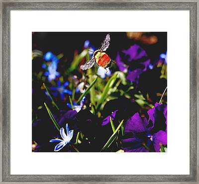 In Flight Framed Print by Rona Black