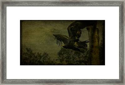 In-flight Framed Print by Shari Mattox