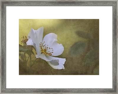 In Golden Light Framed Print by Angie Vogel