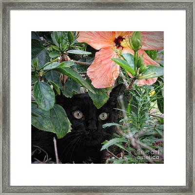 In His Jungle Framed Print by Peggy Hughes