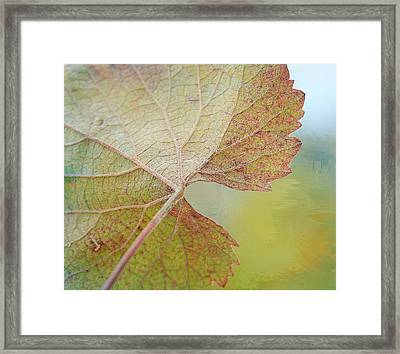 In Honor Of Autumn Framed Print by Fraida Gutovich