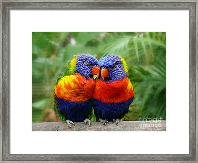 In Love Lorikeets Framed Print by Peggy  Franz