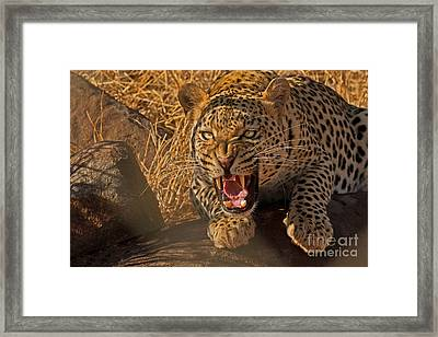 In No Uncertain Terms Framed Print by Ashley Vincent