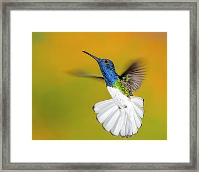 In Reverse Framed Print by Tony Beck