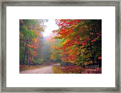 In The Autumn Forest Framed Print by Terri Gostola
