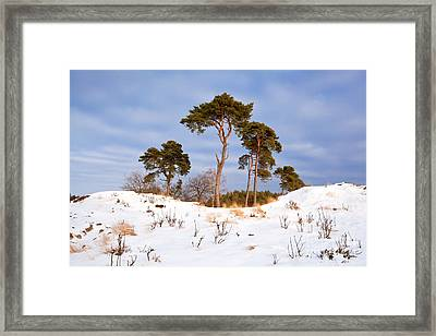 In The Center Framed Print by Olha Rohulya